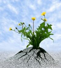 Eight Essentials When Forgiving