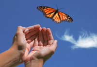 Letting Go of Anger Through Compassion